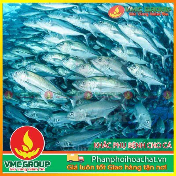 cac-benh-thuong-gap-o-ca-pphcvm